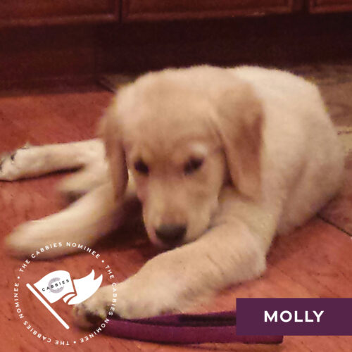 cutest pet nominee - dog - molly