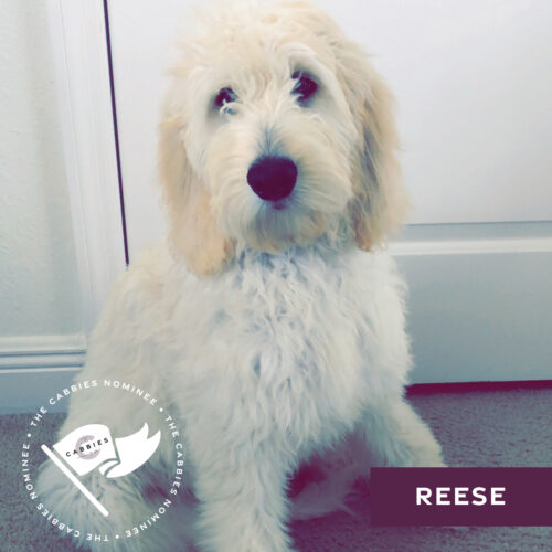 cutest pet nominee - dog - reese